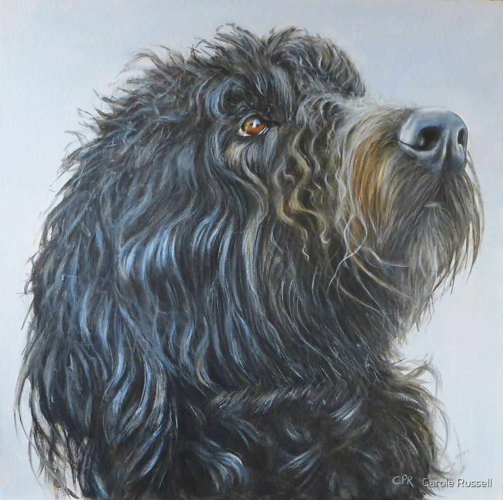 Rufus the Labradoodle by Carole Russell