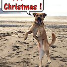 Happy Dog - Happy Christmas by Peter Barrett