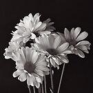 Bunch Of Daisy's by Jeffrey  Sinnock