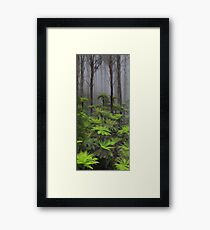 The tallest flowering trees in the world. Mountain ash    Framed Print