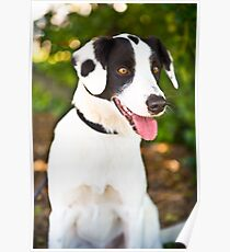 Spotty Rescue Dog *PROCEEDS TO CHARITY* Poster