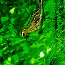 Pacific Golden Plover Abstract Impressionism by pjwuebker