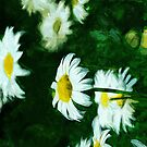 Oxeye Daisies Abstract Impressionism by pjwuebker