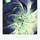 PANTONE #5285 by Laura E  Shafer
