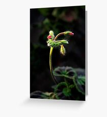 Delicate Curves Greeting Card
