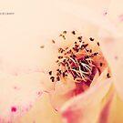 PANTONE - FLOWER #486 by Laura E  Shafer