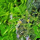Large Leaved Purple Aster Among Burnt Trees Abstract Impressionism by pjwuebker