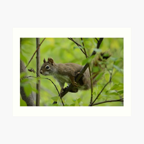 Squirrel In Greenery 1 Art Print