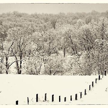 fence line, Clarke County Virginia by grchrdanderson