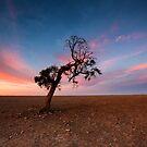 Pastel Dusk by David Haworth