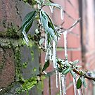 Icicles by kiddchino