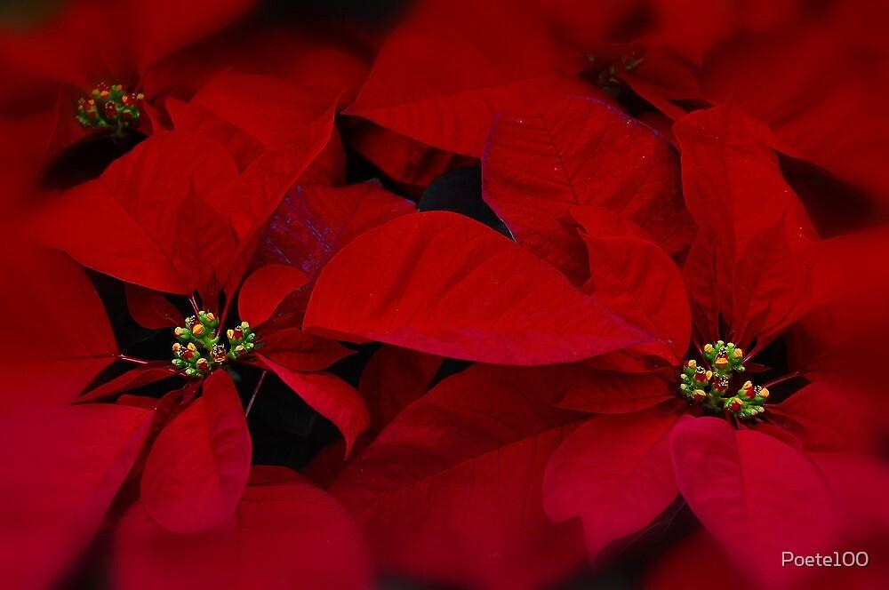 Christmas Dream by Poete100