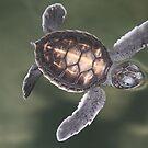 Baby Turtle by kiddchino