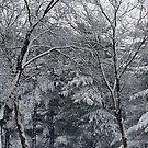 Winter Storm by Gayle Dolinger