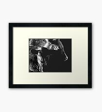 Black Cows Framed Print