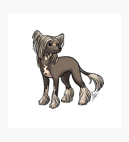 Chinese Crested Photographic Print