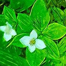 Bunchberry Flower Abstract Impressionism by pjwuebker