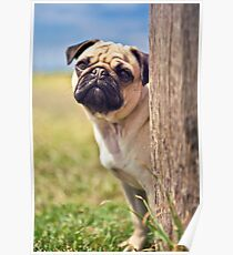 Peek A Boo Pug *PROCEEDS TO CHARITY* Poster