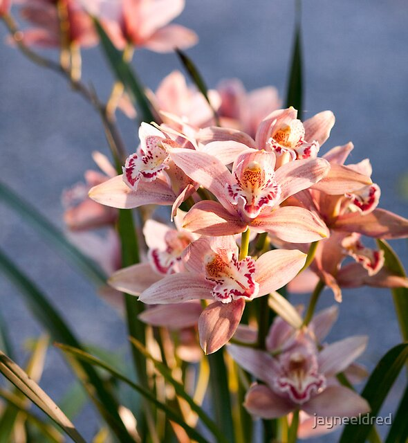 Orchids on Display by jayneeldred