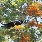 Mr Crow in my Tree by R-Summers