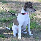My Daughters Dog Indi by R-Summers