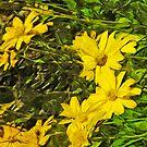 Arrowleaf Balsamroot Flower Abstract Impressionism by pjwuebker