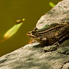 frog by davvi
