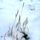 Winter by Ana Belaj