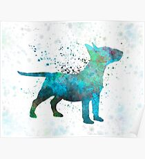 Miniature Bull Terrier in watercolor Poster