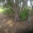 Bushed native trees & plants by frnkmurray