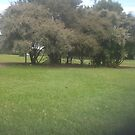 Bush in garden by frnkmurray