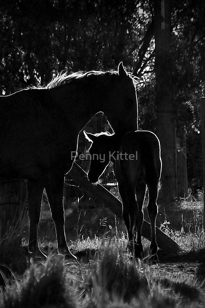 A special evening moment by Penny Kittel