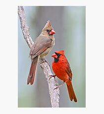 My Cardinal Neighbors Photographic Print