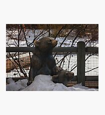 Bears at the Zoo Photographic Print