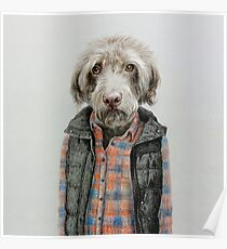 dog in shirt Poster