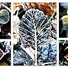 Frozen Treasures of Nature by ©The Creative  Minds