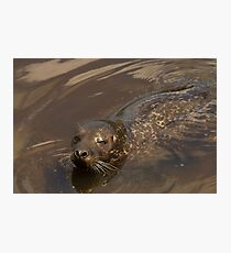 Grey seal Photographic Print
