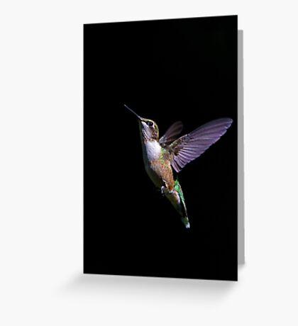 Free - Ruby throated Hummingbird Greeting Card