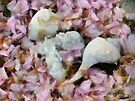 Blossoms and Shells by RC deWinter