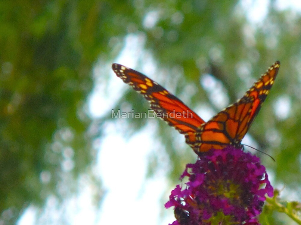 When the Monarch came to town by MarianBendeth