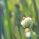 Bugs and Bokeh by Josie Eldred