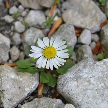 Flower by Kamya