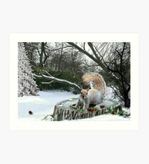 Harry in Winter Art Print
