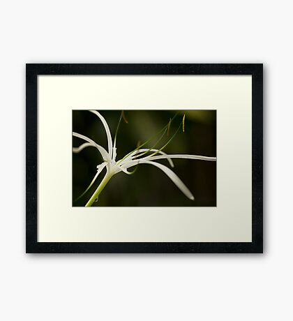 Droplets on Orchid Framed Print