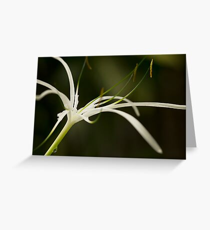 Droplets on Orchid Greeting Card