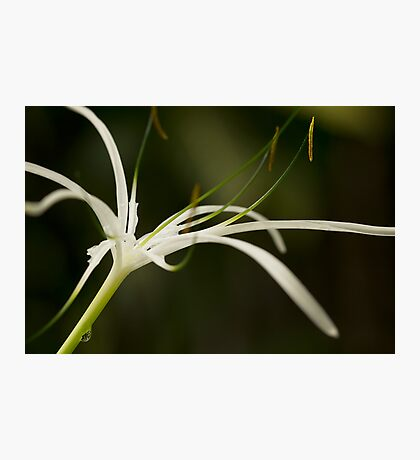 Droplets on Orchid Photographic Print