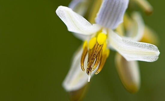 Petals by Susan Tong