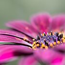 Sunny Bloom by Susan Tong