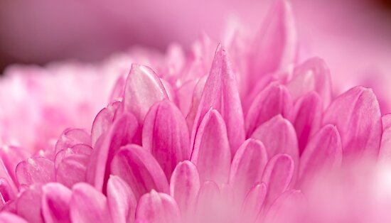 Pretty in Pink by Susan Tong