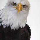Bird of Prey by Mark Poulton